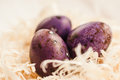 Three purple easter eggs in white nest closeup Royalty Free Stock Photo