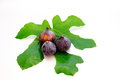 Three purple figs and a green leaf Royalty Free Stock Photo