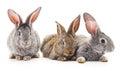 Three Rabbits.