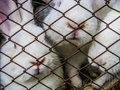 Three rabits in a cage white behind the steel net Stock Photos