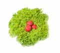 Three radish in lettuce leaves Stock Photo