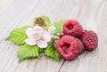 Three Raspberries with leaves Stock Photos