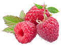 Three raspberry fruit isolated on a white. Royalty Free Stock Photo