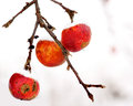 Three red apples Royalty Free Stock Photography
