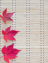 Three red fall leaves Royalty Free Stock Photo