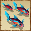 Three red fish with blue spots Royalty Free Stock Photo