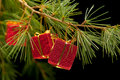 Three red gift boxes on pine branch Royalty Free Stock Photo