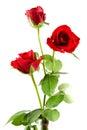 Three red roses Stock Photos