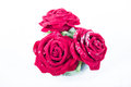 Three red roses on a white background Stock Image