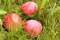 Three ripe apples on green grass Stock Images
