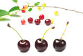 Three ripe cherry Royalty Free Stock Photo