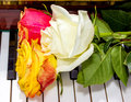 Three roses on a piano Stock Photography