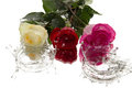 Three roses reflection and drops flowers fall of liquid Royalty Free Stock Photos