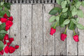 Three roses and rose petals on wooden background top view Stock Image