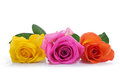Three roses yellow orange and pink isolated on white background Stock Photography