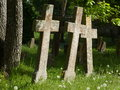 Three in a row moss covered stone crosses the graveyard of st bridget s convent pirita tallinn Royalty Free Stock Image