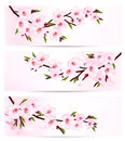 Three sakura branch banners vector Royalty Free Stock Images