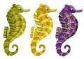 Three seahorses Royalty Free Stock Photo