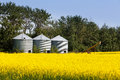 Three silos canola rapeseed agriculture field Royalty Free Stock Photo