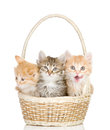 Three small kittens in a basket. Royalty Free Stock Photo