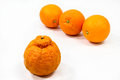 Three smooth oranges keep their distance odd lumpy skinned type orange Royalty Free Stock Photography