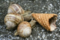 Three snails Stock Images