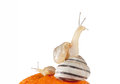 Three snails on the orange (isolated on white)