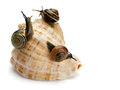 Three snails and sea cockleshell garden creeping on a are isolated on Stock Images
