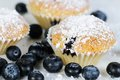 Three soft blueberry muffins with powdered sugar on slate dark Royalty Free Stock Images