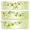 Three spring banners with blossoming tree brunch flowers vector illustration Royalty Free Stock Photo