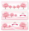 Three spring banners with pink cherry blossom trees.