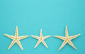 Three starfish blue paper background copy space Royalty Free Stock Photo