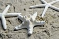 Three starfish on a sandy beach white Stock Image
