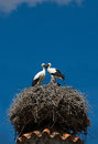 Three storks in the nest on the background of the blue sky badajoz spain Royalty Free Stock Images