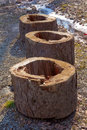 Three stumps on pebbles with tree rings and gigantic hole in the middle Stock Photo
