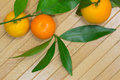 Three tangerine and green branches