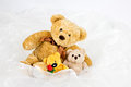 Three teddy-bears Stock Photo