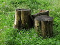 Three thick stumps Stock Photography