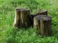 Three thick stumps