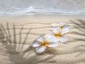 Three tiare flowers on the beach Royalty Free Stock Photo