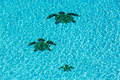 Three tiled turtles on bottom of swimming pool the floor a apparently moving away from the camera with ripples surface water Royalty Free Stock Photos