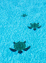 Three tiled turtles on bottom of swimming pool the floor a apparently moving towards the camera with ripples surface water Royalty Free Stock Photos