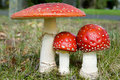 Three toadstools Royalty Free Stock Images