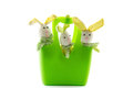 Three toy easter bunnies in a basket green isolated Royalty Free Stock Images