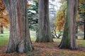 Three Tree Trunks Royalty Free Stock Photos