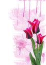 Three tulips pink watercolor background Royalty Free Stock Photography
