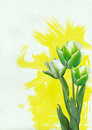 Three tulips yellow watercolor background Royalty Free Stock Image