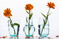 Three vase and flowers on white background. Royalty Free Stock Photo