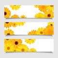 Three vector banners with orange and yellow gerbera flowers. Royalty Free Stock Photo