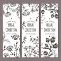Three vector labels with burdock, chicory, saint john wort